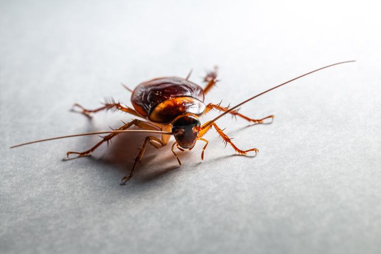 cockroach-pest-control-service