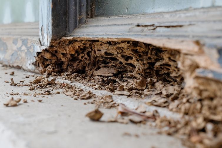 termite-pest-control-service
