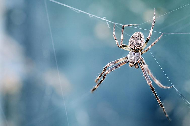 spider pest control company