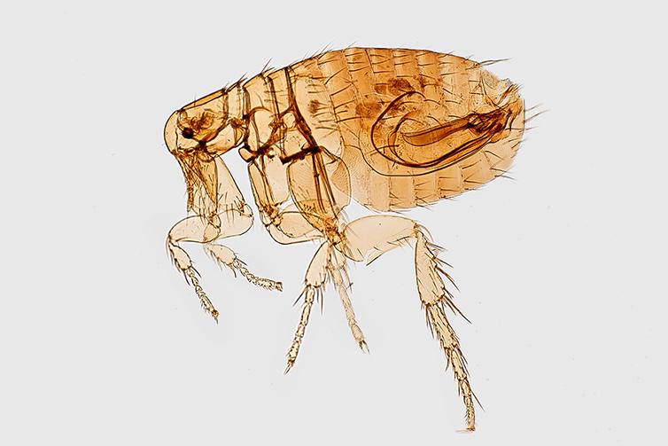 flea tick pest services